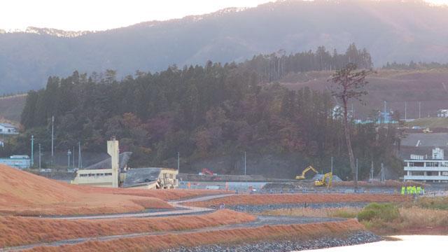 曾被海啸抹去的城市,募集了1.5亿日元保护一棵松树