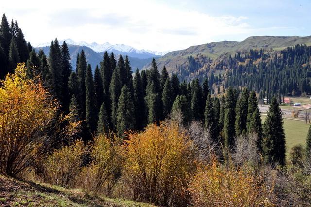 林草局:尽快出台国有森林资源资产有偿使用制度改革方案